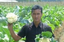 kebun bunga kol